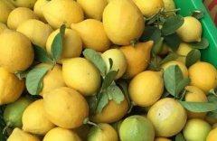 柠檬空气能烘干机-柠檬烘干工艺