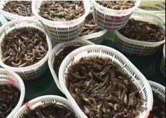 海虾空气能烘干机-海虾烘干工艺